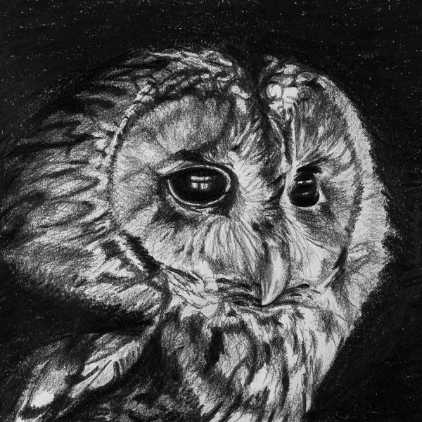 Christine Morgan - Owl